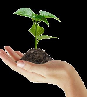 hand_holding_plant