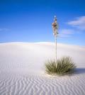 Sahara-Desert-10